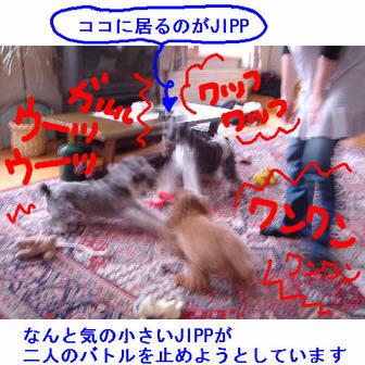 Jipp4
