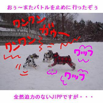 Jipp_10