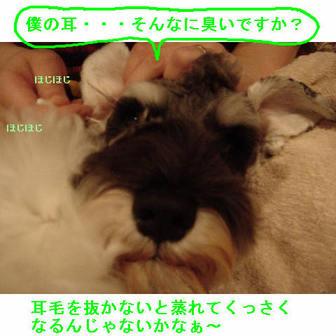 Jipp3