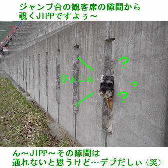 Jipp_5