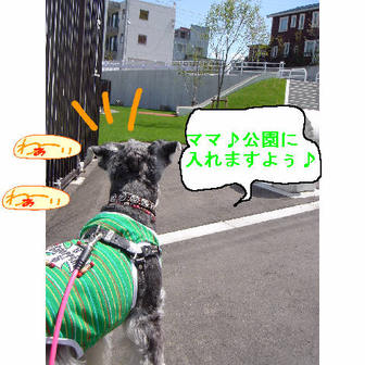 Jipp_3