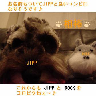 Jipp6