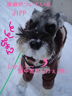 Jipp_4