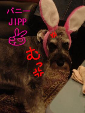 Jipp_9