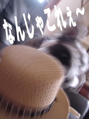 Jipp_2