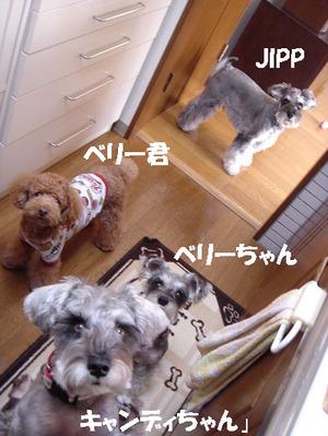 Jipp8