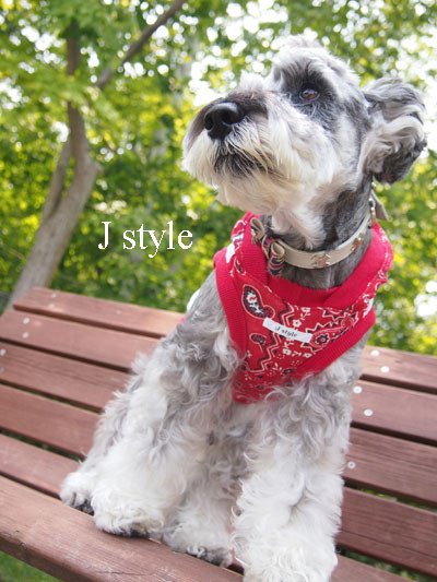 Jstyle14