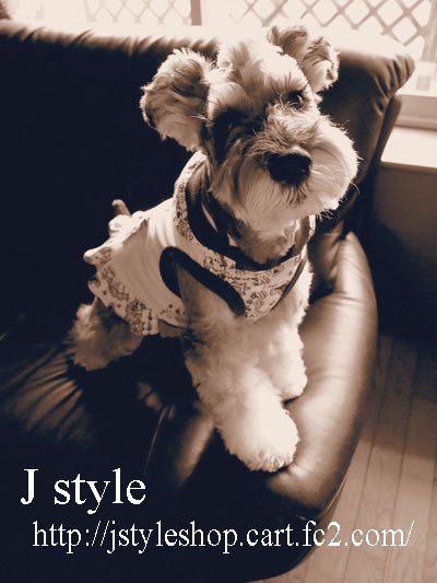Jstyle1